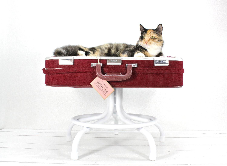 imac cat bed its a cats life